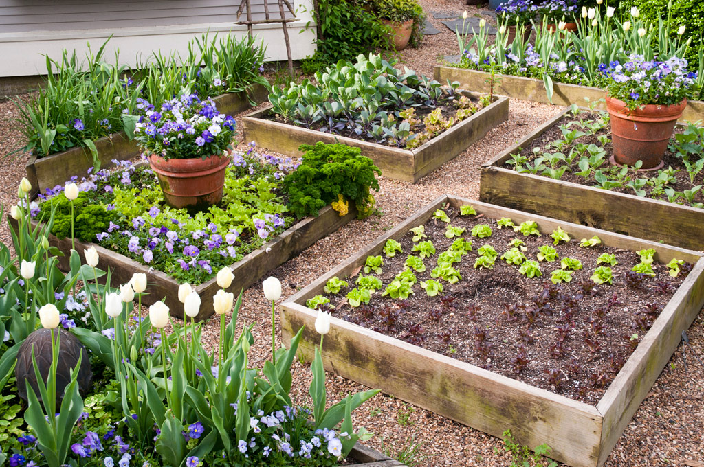 Picture of: The Benefits Of Raised Bed Gardening Tui Landscape